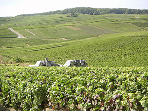 Champagne vineyards as far as the eye can see