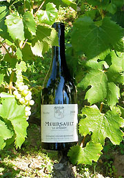 Bottle of Mersault.  Photo copyright David and Lynne Hammond.  All rights reserved.